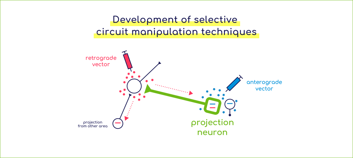 Development of selective circuit manipulation techniques