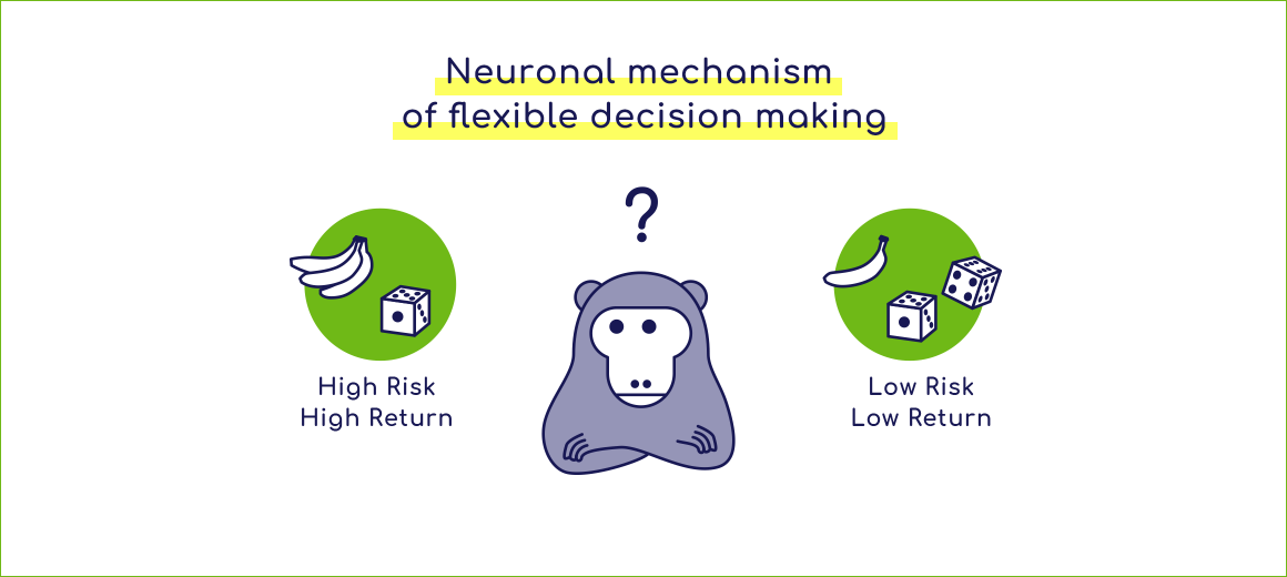 Neural mechanism of flexible decision making