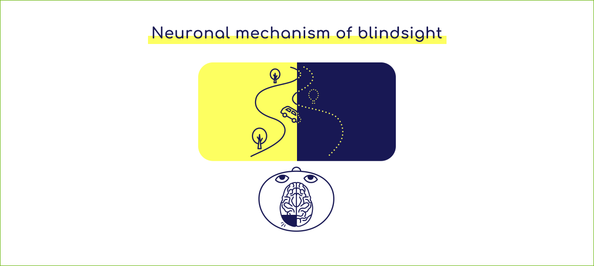 Neural mechanism of blindsight