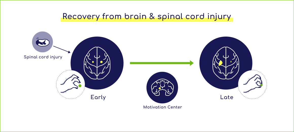 Recovery from brain & spinal cord injury