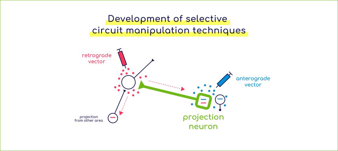 選択的神経回路操作技術の開発