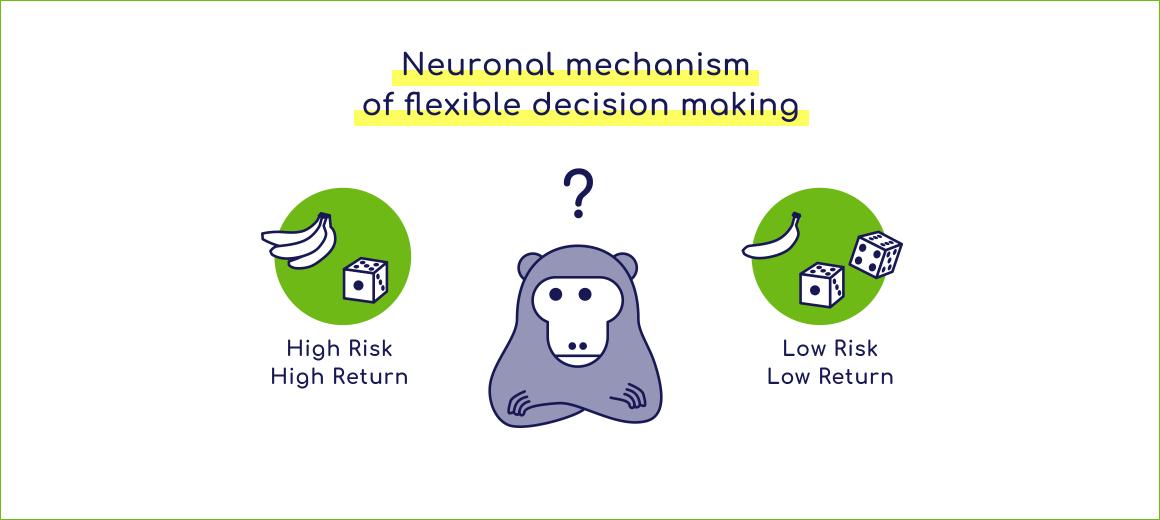 柔軟な意思決定の神経機構