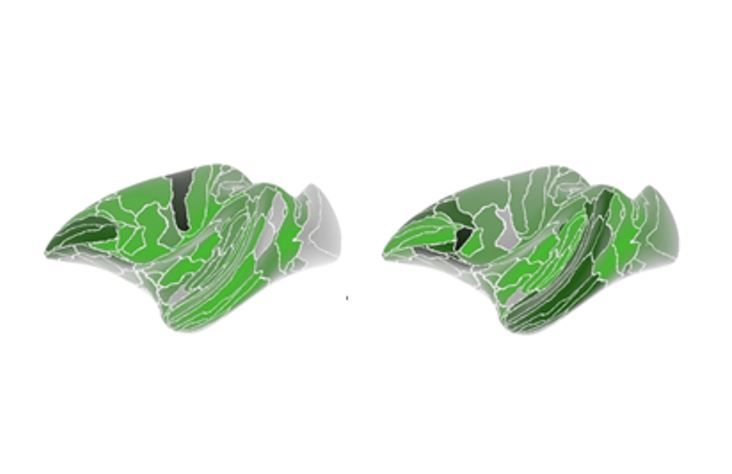霊長類の腹側被蓋野から全脳への投射パターンを解析した論文が Cerebral Cortex 誌にアクセプト!