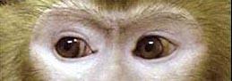 盲視サルの視覚オペラント学習に関する論文がScientific Reports誌に掲載されました